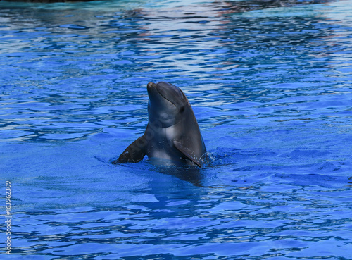 dolphin jump out of water