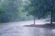 heavy rain and tree in the parking lot