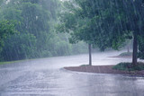 heavy rain and tree in the parking lot - 163966311