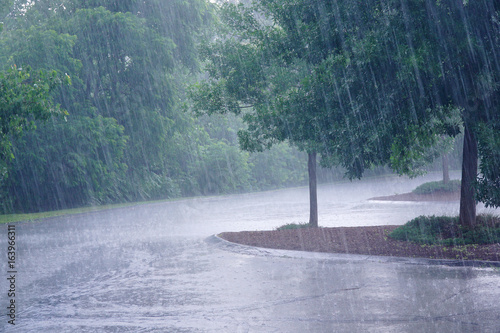 heavy rain and tree in the parking lot Poster