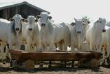 Fazenda de gado - MT - 163982980