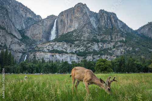 Wildlife in Yosemite Poster