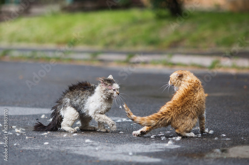 Street cats are fighting on the street Poster