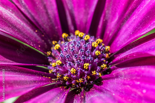 Purple Flower - 164000183