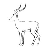 portrait of a standing impala africa mammal wild vector illustration - 164012930