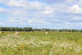 Heuernte, Strohballen, Wildblumen, Feld - 164023795