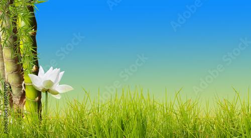 bordure d'herbe, de bambou et de lotus, fond bleu