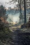 Sanglier en forêt de Fontainebleau