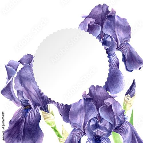 Fotobehang Iris Hand drawn watercolor iris flowers