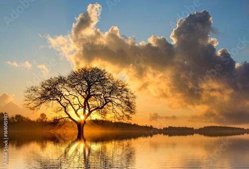 Landscape - 164045981