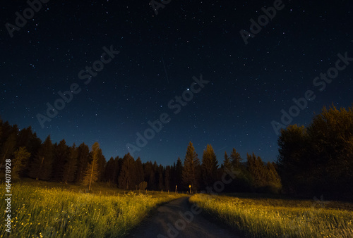 Night landscape under starlight