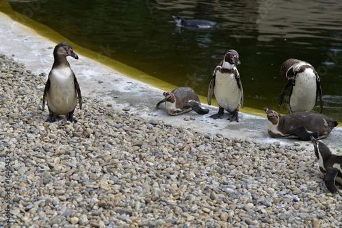 Humboldt Penguins Group