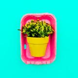 Decorative flower in a pot. Minimal art - 164095952