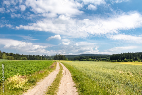 Dirt road through summer landscape with fields - 164096715
