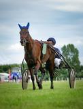 Trabrennen - Jokey mit Pferd in der Vorwärmrunde - 164142931