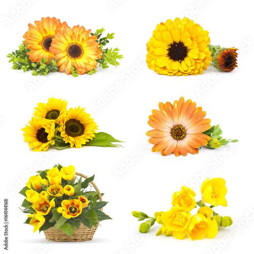 Fotobehang Gerbera collage with flowers
