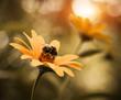 yellow summer flowers closeup