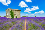 Landscape in Provence - 164149737