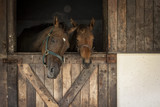 Horses in a stable, looking out.