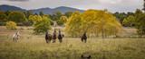 Horses running in an open grass field