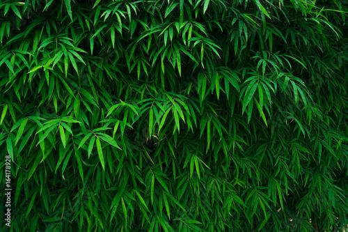 Aluminium Bamboe Bamboo leaves background