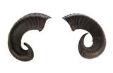 Pair of ram horns - 164189783