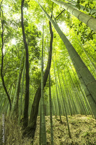 Sagano bamboo park Kyoto