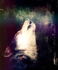 Howling Wolf. Awesome Trendy Colorful Wallpaper With Mystic Wolf. Perfect Halloween Background.  Design for t-shirt print with wolf.