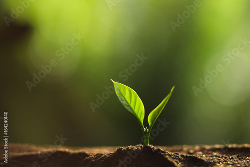 Plant a tree in nature,coffee tree,fresh - 164240140