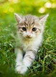 Little kitten in green grass in the park