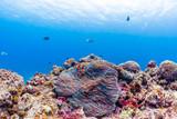 Colorful Ocean Reef