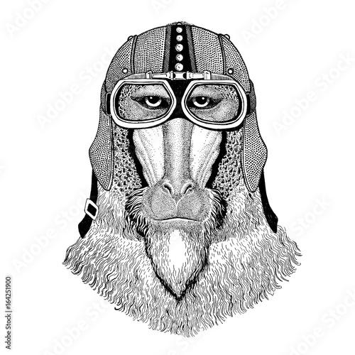 Monkey, baboon, dog-ape, ape Motorcycle, biker, aviator, fly club Illustration for tattoo, t-shirt, emblem, badge, logo, patch