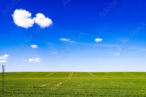 beautiful green fields under blue sky in summer