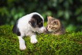 Little puppy with a little tabby kitten - 164286545