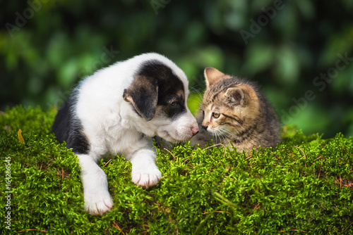 Little puppy with a little tabby kitten Poster