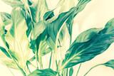 Exotic plants background - 164310305