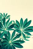 Exotic plants background - 164310526