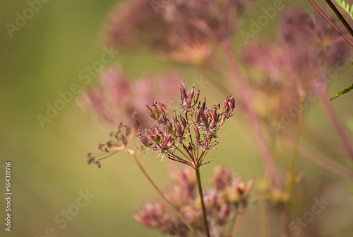 wild flowers in summer with a lovely background