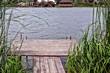 Постер, плакат: деревянный мостик над водой в зелёных камышах на берегу