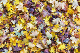 Autumn background of colourful fallen leaves. - 164322123