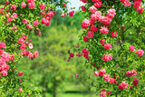 summer garden - 164341559