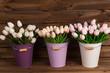 Tulipanes blancos y rosas en cubos de colores. - 164353527