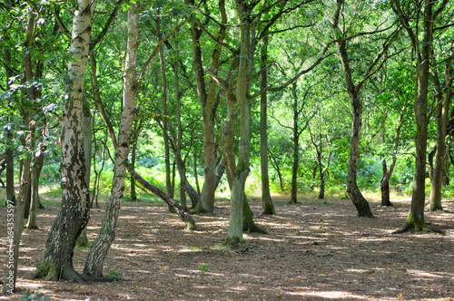 A wide sunlit footpath passes between oak and silver birch trees in Sherwood Forest..