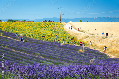 Crowds of tourists from all over the world admire beautiful countryside near Valensole, Provence, France