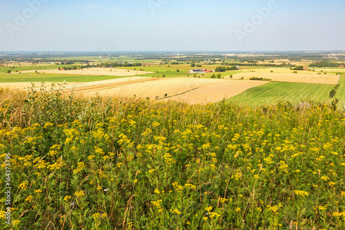 Tansy blooming and views of the landscaped countryside