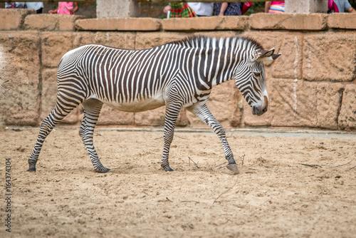 Plakat Zoo de la Palmyre 2017