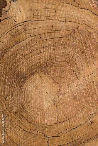 Holzfläche und Holzstruktur als Hintergrund - 164386170