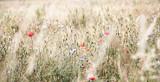 Kornfeld im Licht, mit Blumen und Biene