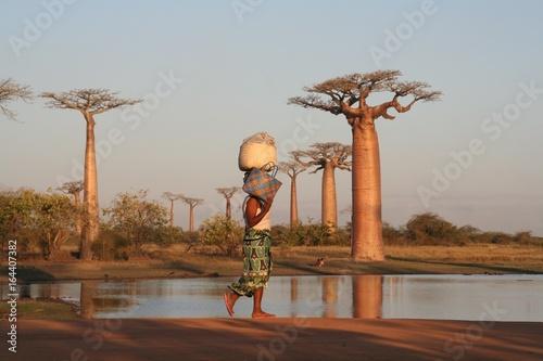 Papiers peints Baobab Allée des baobabs