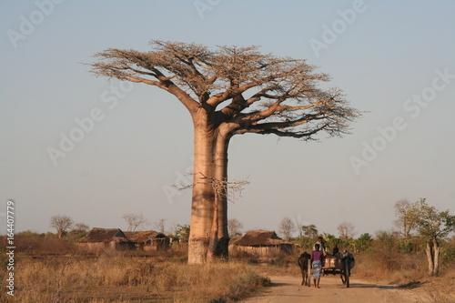 Fotobehang Baobab Route et baobab